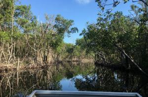 Sannysideoflife_Everglades_Florida