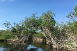 Sannysideoflife_Everglades Nationalpark_Florida